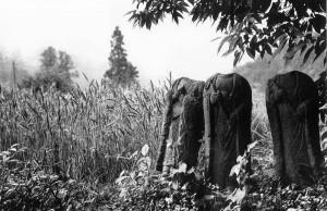 生涯、秩父を撮り続けてきた清水武甲さんの作品の一つ「出牛街道の首なし地蔵」